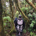 Garajonay National Park | La Gomera 2017